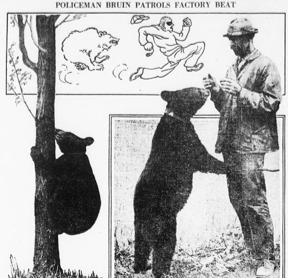 BearWatchman