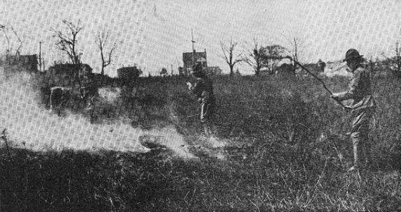 Scouts clearing idle land in preparation for a crop. The caption notes that fire is a useful ally, but the Scouts watch it closely. In a month, this field was to be covered with navy beans.